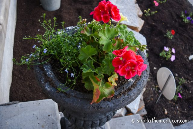 Start at Home Decors Beginners Guide for Planting Flower Pots