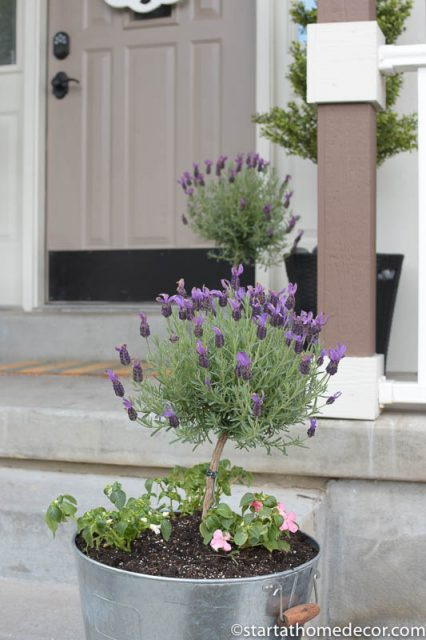Adding Curb Appeal to Our Spring Front Porch | hello door hanger | Lavender Topiary | Farmhouse