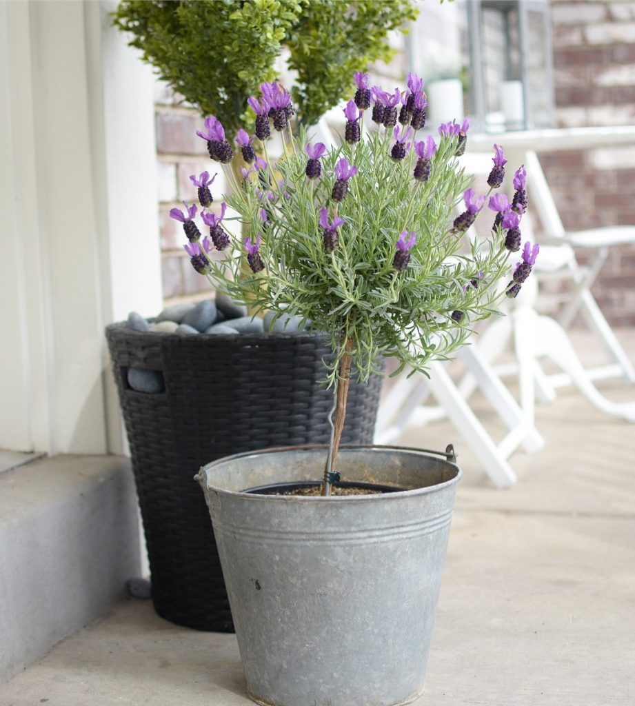 Adding Curb Appeal to Our Spring Front Porch | hello door hanger | Lavender Topiary | Farmhouse | Galvanized Bucket