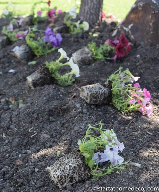 beginner's guide for planting flowers | tips and tricks for planting