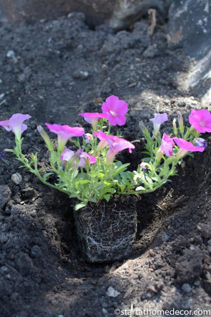 beginner's guide for planting flowers | start at home flower planting