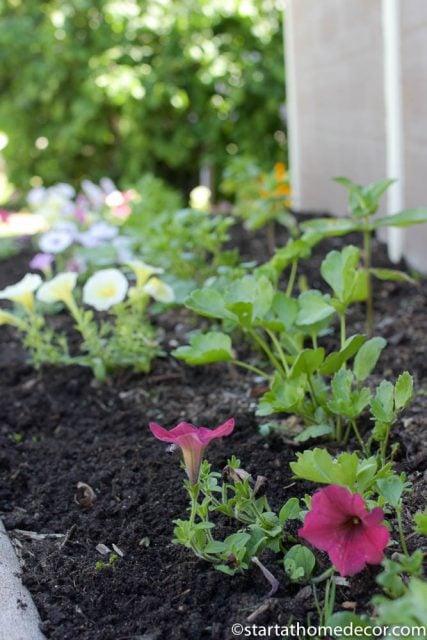 beginner's guide for planting flowers | beginner flower planting