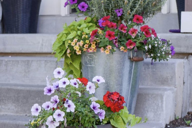 Beginners Guide for Planting Flower Pots