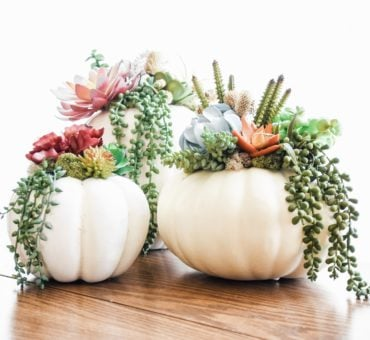 How to Create Succulent Pumpkins